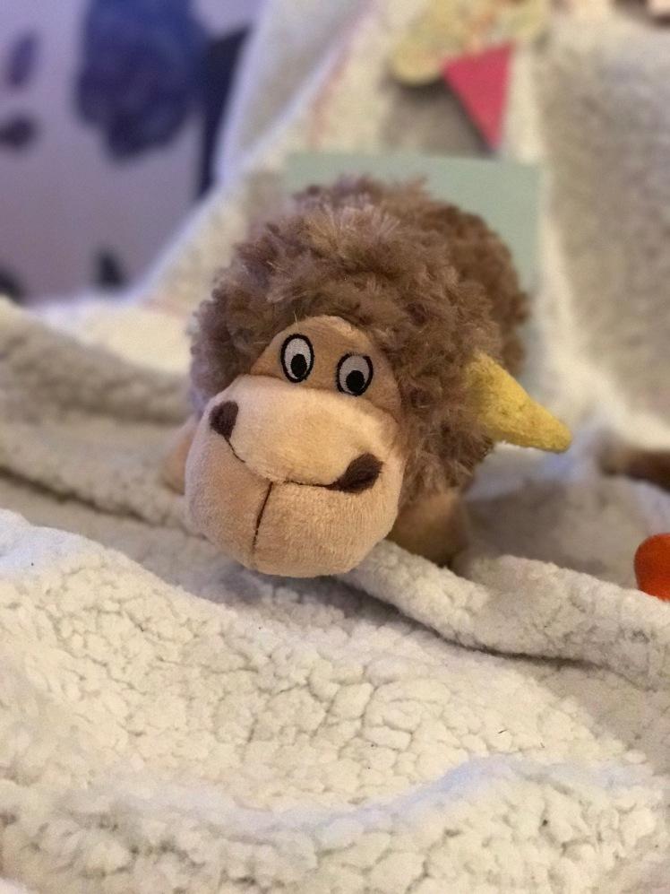 Cookie's Sheep