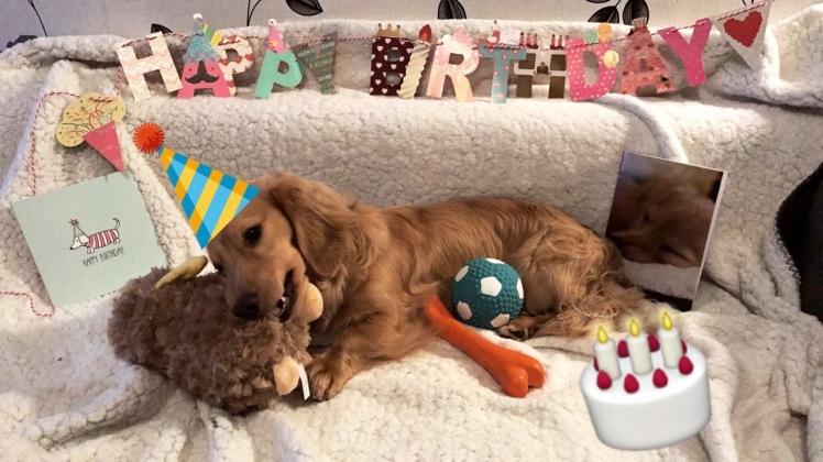Happy Birthday Cookie!