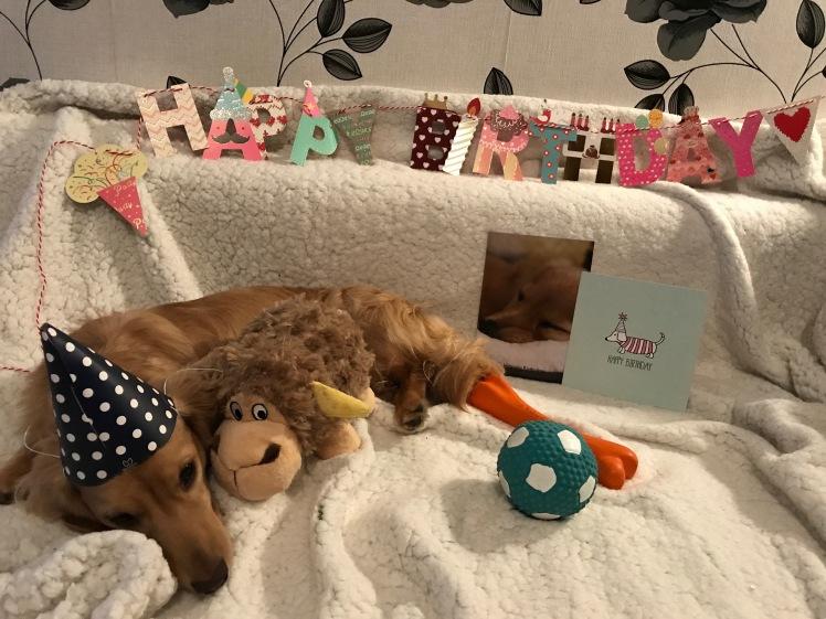 Cookie's Birthday